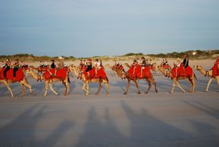 Other Camel Riders