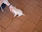 Ella_kevins_9_week_old_puppy
